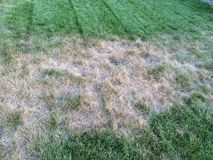 草坪真菌 库存图片