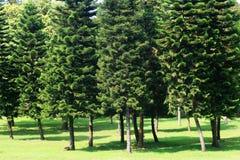 草坪结构树 库存图片