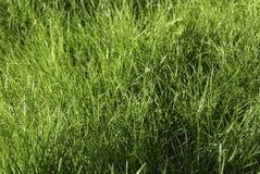 草坪背景  免版税库存照片