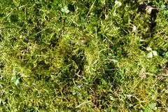 草坪长满与青苔 免版税库存图片