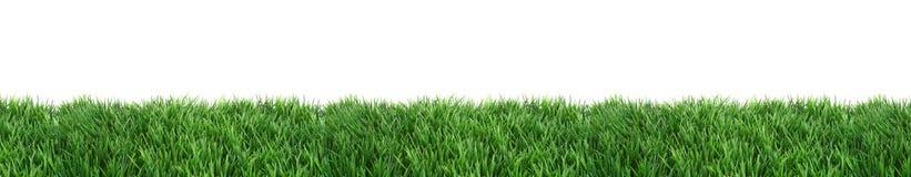 草坪 库存图片