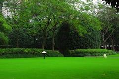 草坪 免版税图库摄影