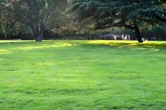 草坪 库存照片
