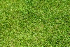 草坪 免版税库存图片