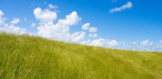 草坪 免版税库存照片