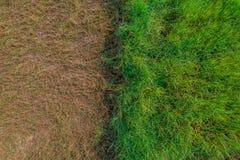 绿草域 免版税库存照片