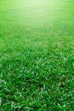 绿草域 图库摄影