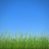 草和天空 图库摄影
