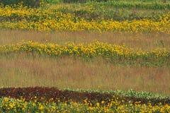 草大草原高sumac的向日葵 免版税库存照片