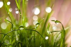 草宏观叶子与露水的 免版税库存照片