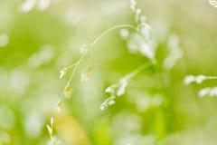 草宏观射击与种子的 库存图片
