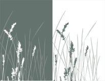 草实际剪影向量 库存照片
