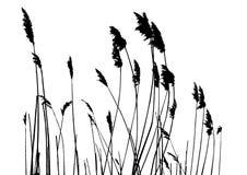 草实际剪影向量 库存图片