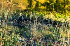 草密集的丛林  库存图片