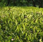 绿草小山在庭院里 免版税库存照片