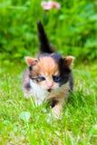 草小猫一点 图库摄影