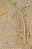 草干燥花在本质的 库存照片