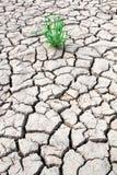 草成长通过干破裂的泥 免版税图库摄影