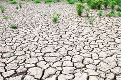 草成长通过干破裂的泥 免版税库存图片