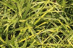 草房子喜欢园林植物 免版税库存照片