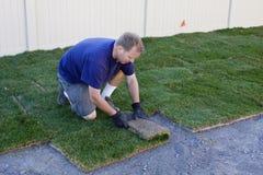 草新的种植的草皮露天工作 免版税库存照片