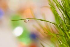 草明亮的特写镜头叶子与露水的 库存图片