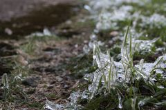 草是绿色和雪 冬天 免版税图库摄影