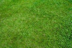 草是绿色和美好的地面 库存照片