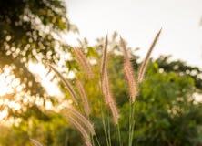 草有太阳天空背景 库存图片