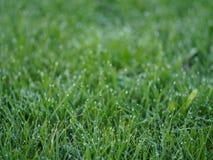 草有模糊的背景 库存图片