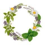 草本和花的传染媒介圆的装饰品 免版税图库摄影