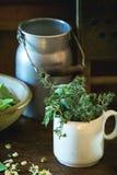 草本和年轻香豌豆花 免版税图库摄影