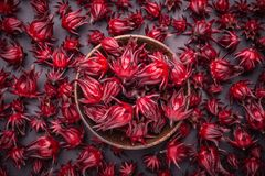 草本或食物概念的新红色Roselle用途 库存图片