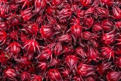 草本或食物概念的新红色Roselle用途 免版税图库摄影