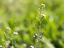草本植物在沙漠 免版税库存图片