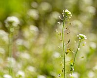 草本植物在沙漠 库存图片