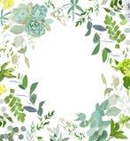 草本混合正方形传染媒介框架 手画植物、分支、叶子、多汁植物和花在白色背景 库存图片