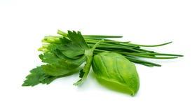 草本混合蓬蒿在白色背景隔绝的香葱荷兰芹 库存图片