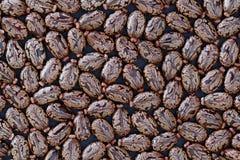 草本种属蓖麻籽的蓖麻-特写镜头视图 免版税库存照片