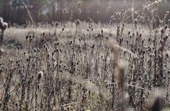 草本种植草甸 图库摄影