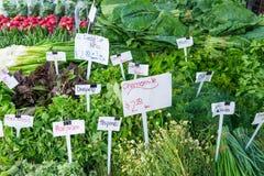 草本立场在一个地方农夫市场上 免版税库存图片