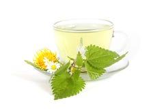 草本荨麻茶 免版税库存照片