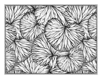 草本装饰装饰着色页 免版税图库摄影