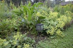 草本边界在村庄庭院里 库存图片