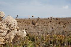 草本领域在葡萄牙 图库摄影