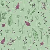 草本,香料,莳萝绿色样式 免版税库存图片