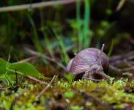 草本质俄国蜗牛原野世界 库存照片