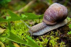 草本质俄国蜗牛原野世界 免版税库存图片