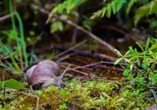 草本质俄国蜗牛原野世界 图库摄影