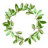 草本minimalistic圆的传染媒介框架 手拉的植物,分支,在白色背景的叶子 绿叶婚礼 皇族释放例证